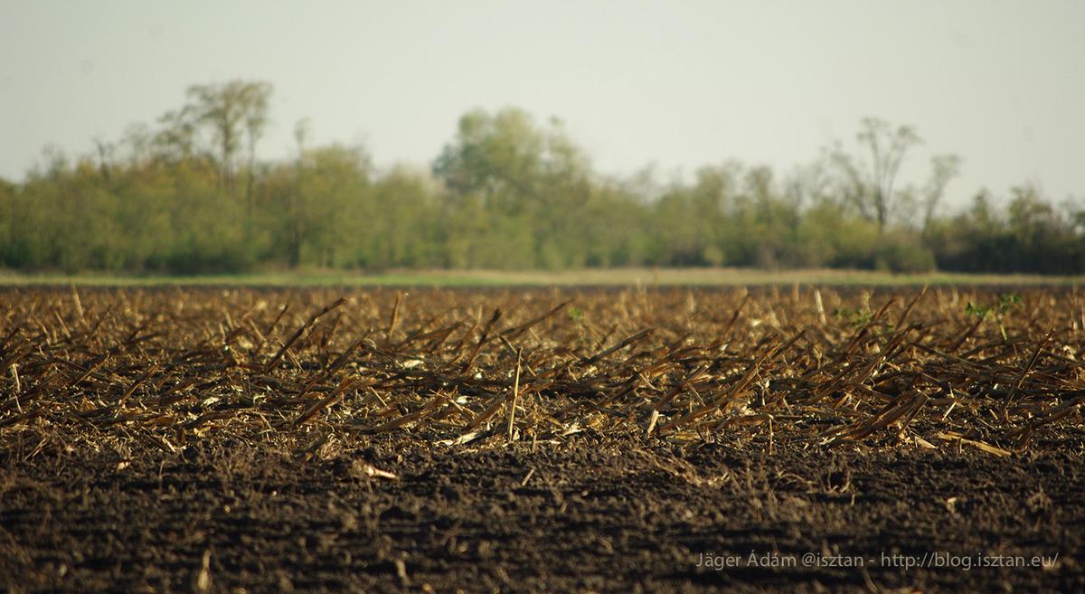 Őszi szántás kukoricatorzsákkal - Kiskunság